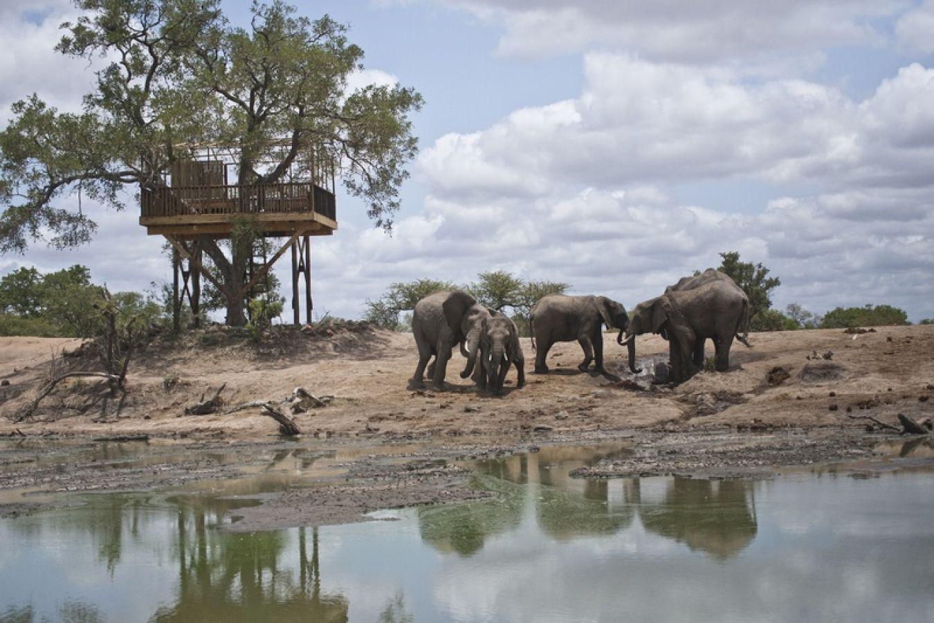 Umlani Bushcamp treehouse