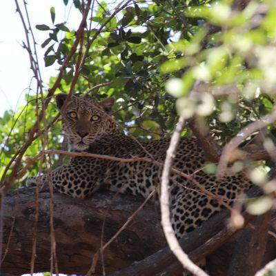 Tips voor een geslaagde safari