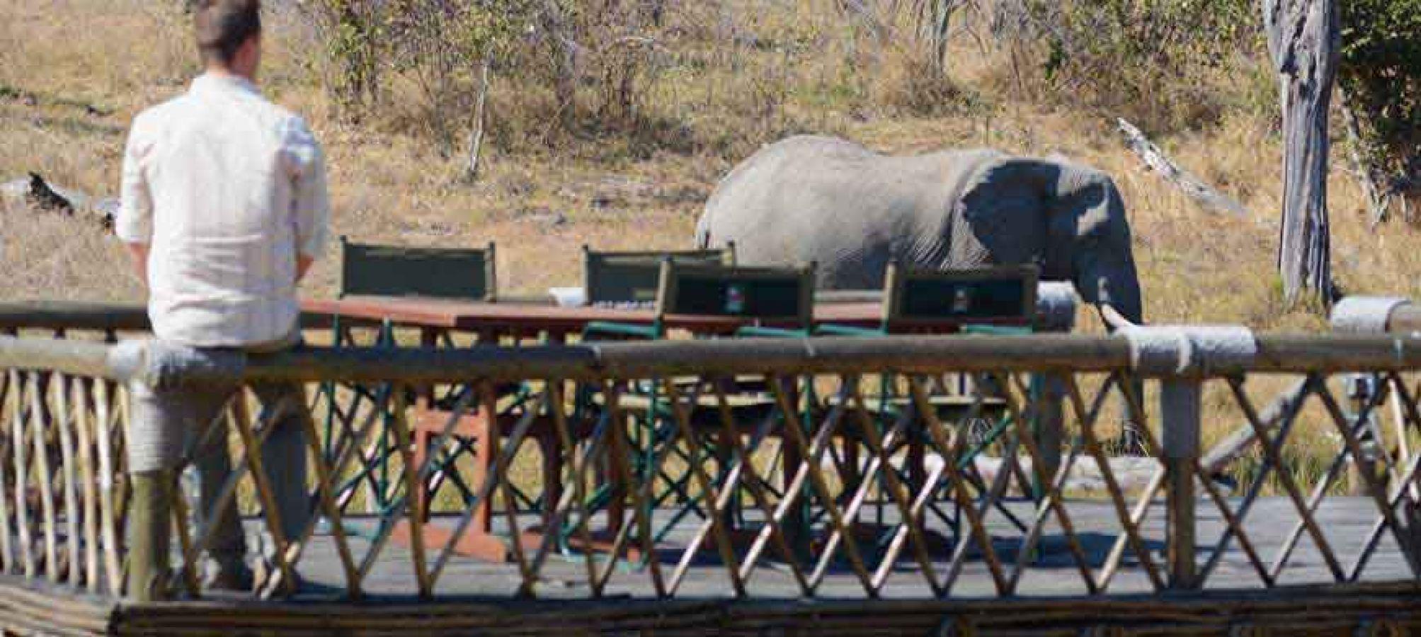 Camp Savuti olifant