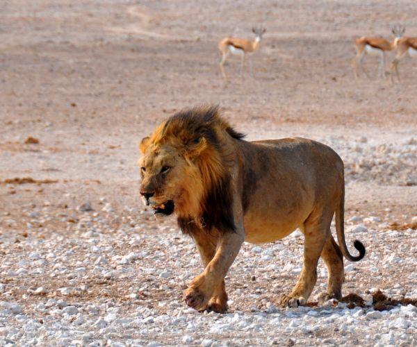 Rondreis Namibië & Zuid-Afrika maar dan anders