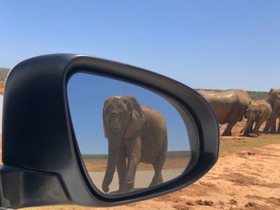 Self drive 4x4 rondreis Botswana startend in Zuid-Afrika