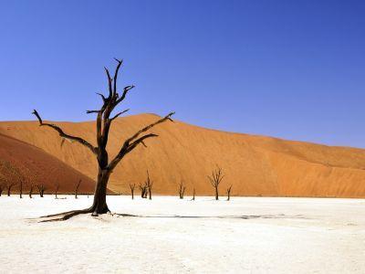 Selfdrive Namibië: Natuur, Cultuur & Safari
