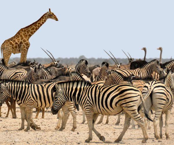 Kampeer groepsreis Victoria Falls & Namibië