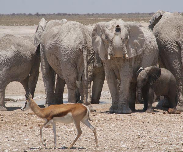 Groepsreis Namibië Highlights