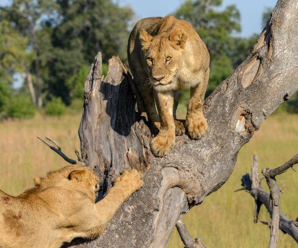 Groeps kampeersafari Namibië, Botswana & Victoria Falls