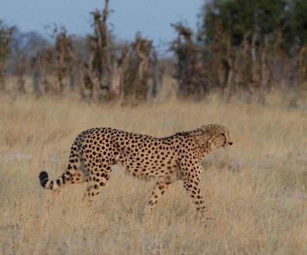 Groeps kampeersafari Botswana Essentie