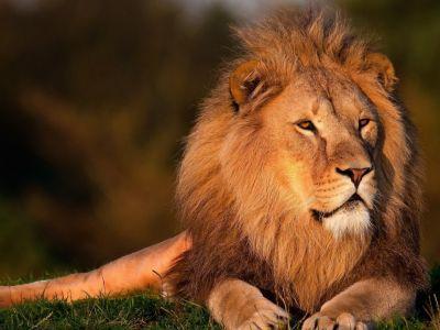Safari door mooiste wildparken Zuid-Afrika