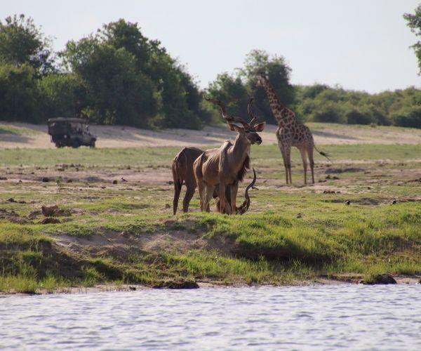 Safari Zimbabwe Mooiste Wildparken met transfers en fly-in safari