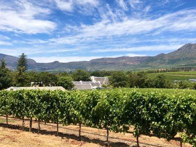 Rondreis Zuid-Afrika: Kaapstad, Tuinroute & Safari
