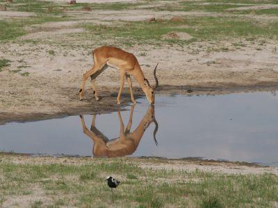 Fly-in safari Botswana & Victoria Falls