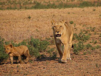Safari Zambia Kafue National Park