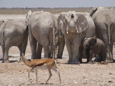 Groepsreis Namibie Highlights