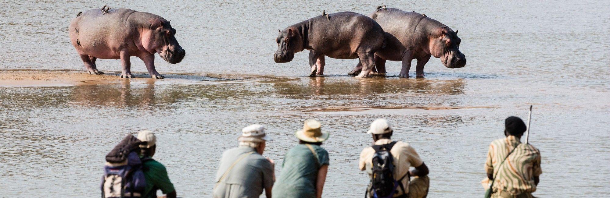 Zambia wandelsafari