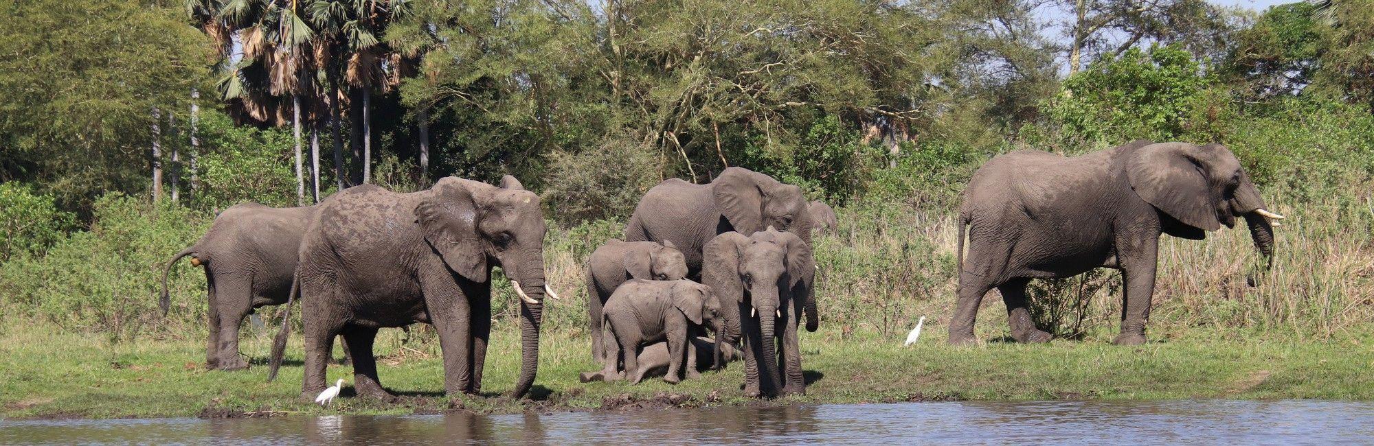 Malawi Safari's