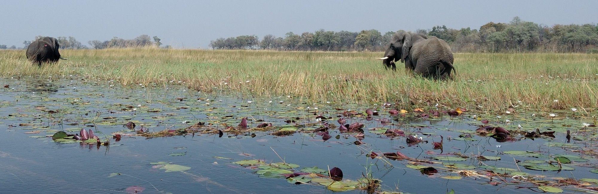 Kampeersafari Namibië, Botswana en Victoria Falls