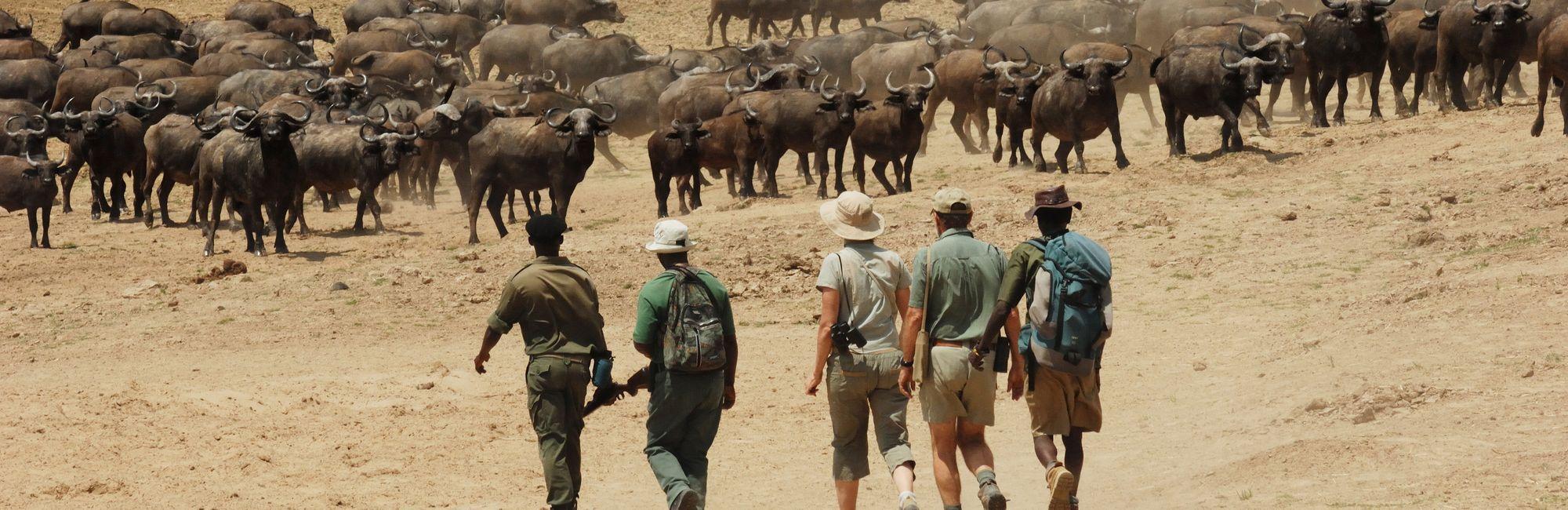 Home walking safari