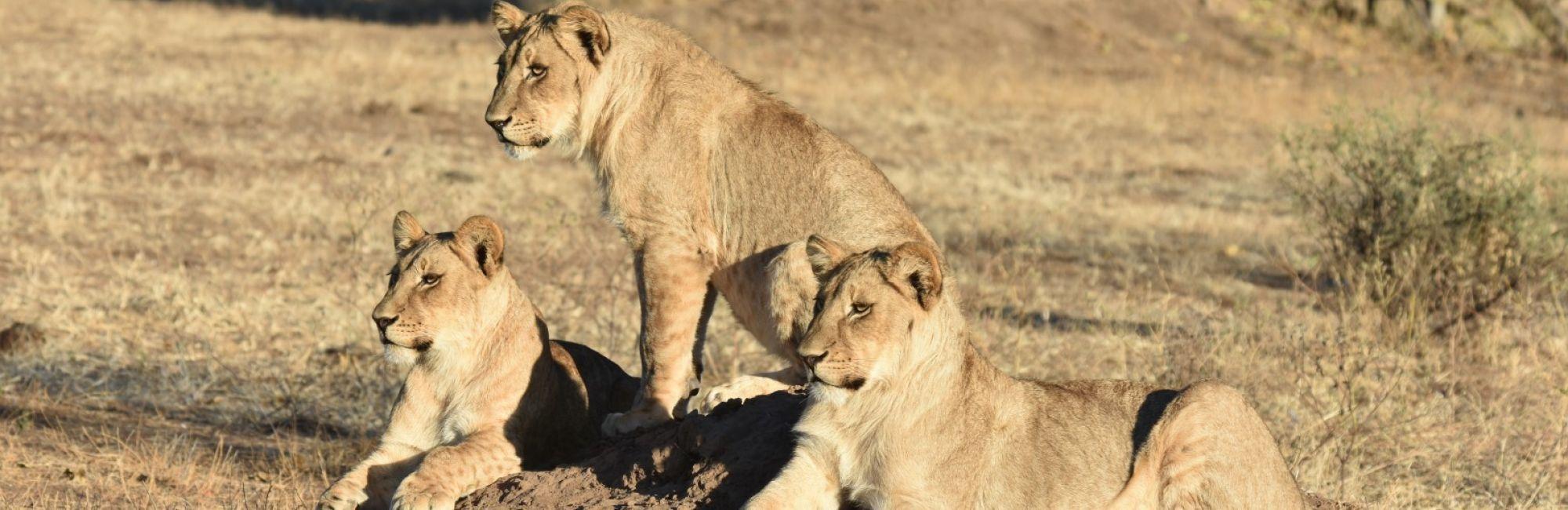 Safari mooiste wildparken Zuid-Afrika