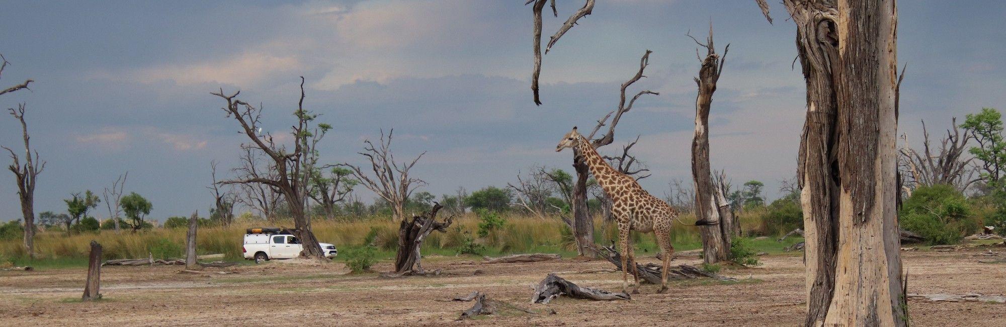 Self drive 4x4 rondreis Botswana