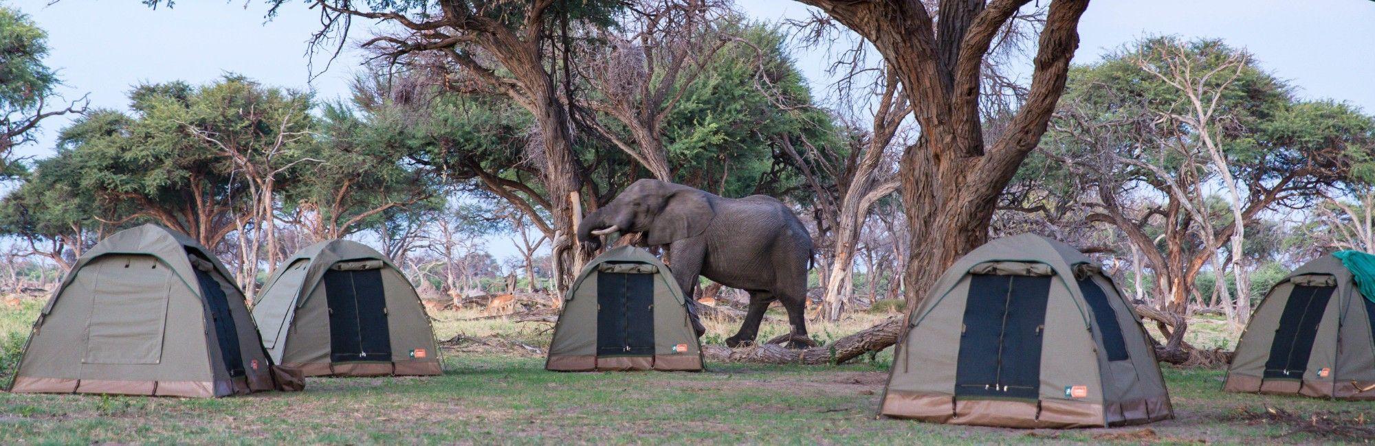 Kampeersafari Botswana Highlights