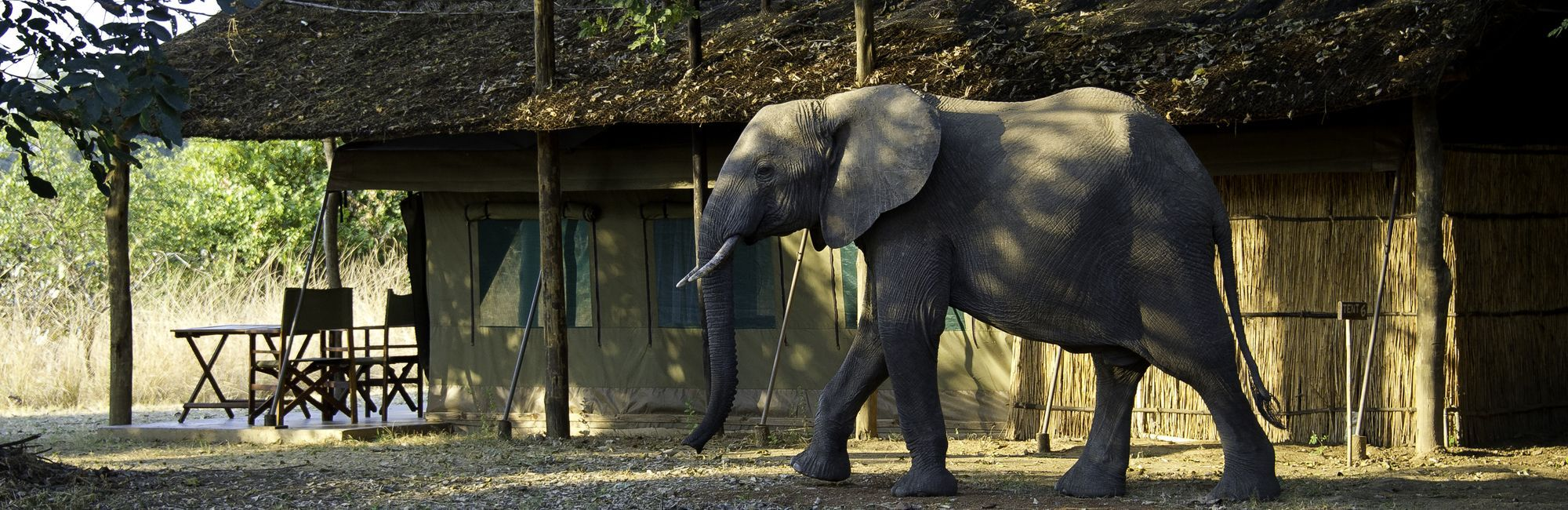 Home olifant in camp