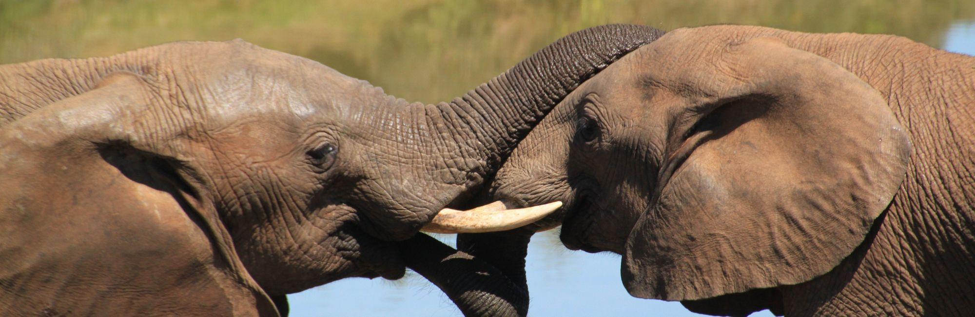 Safari reis Zuid-Afrika met chauffeur