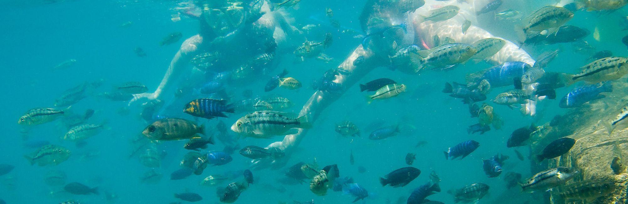 Malawi Snorkelen
