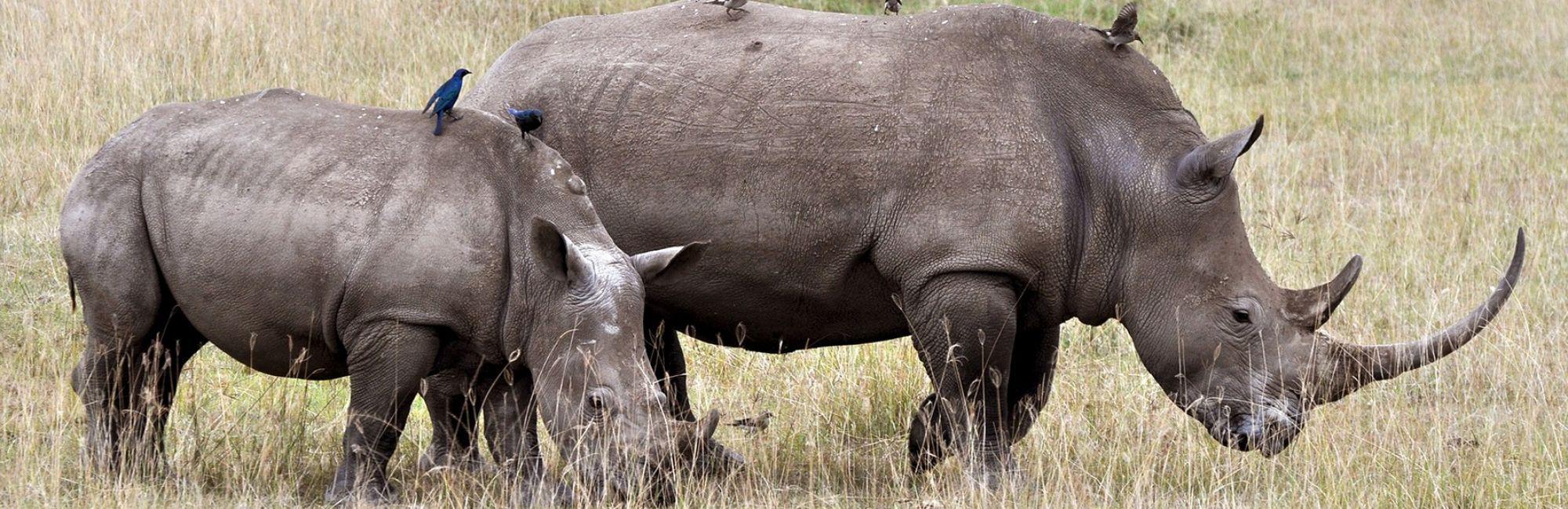 Safari Zimbabwe Mooiste Wildparken