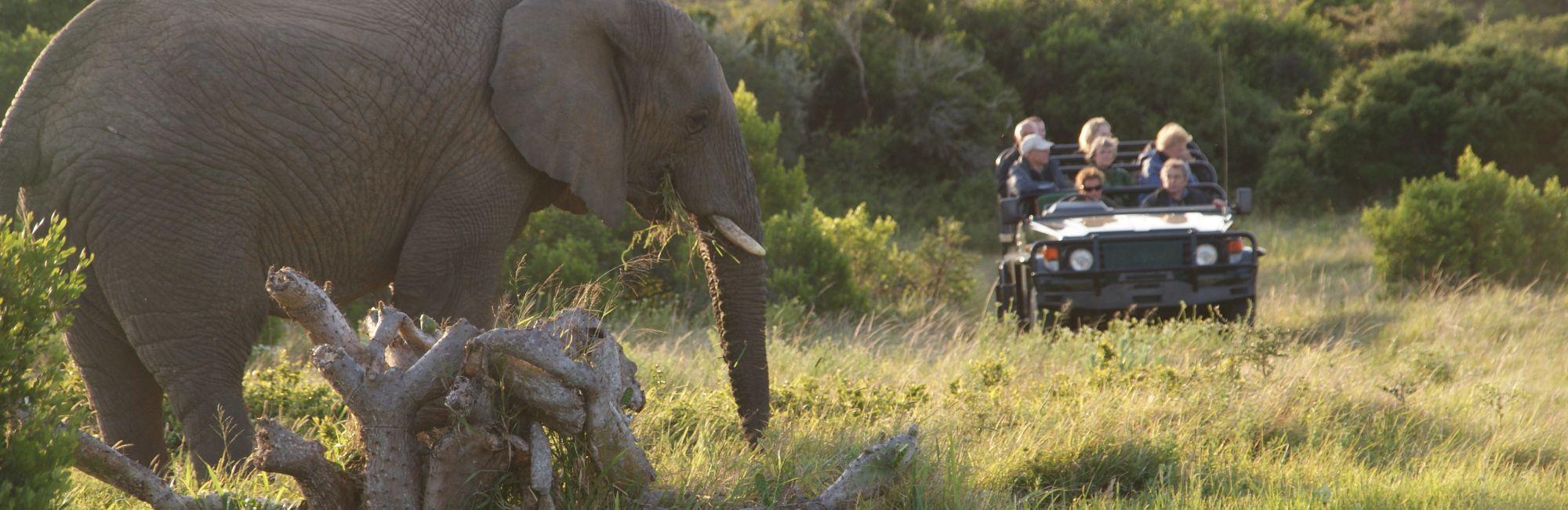 Zuid-Afrika Kariega game drive