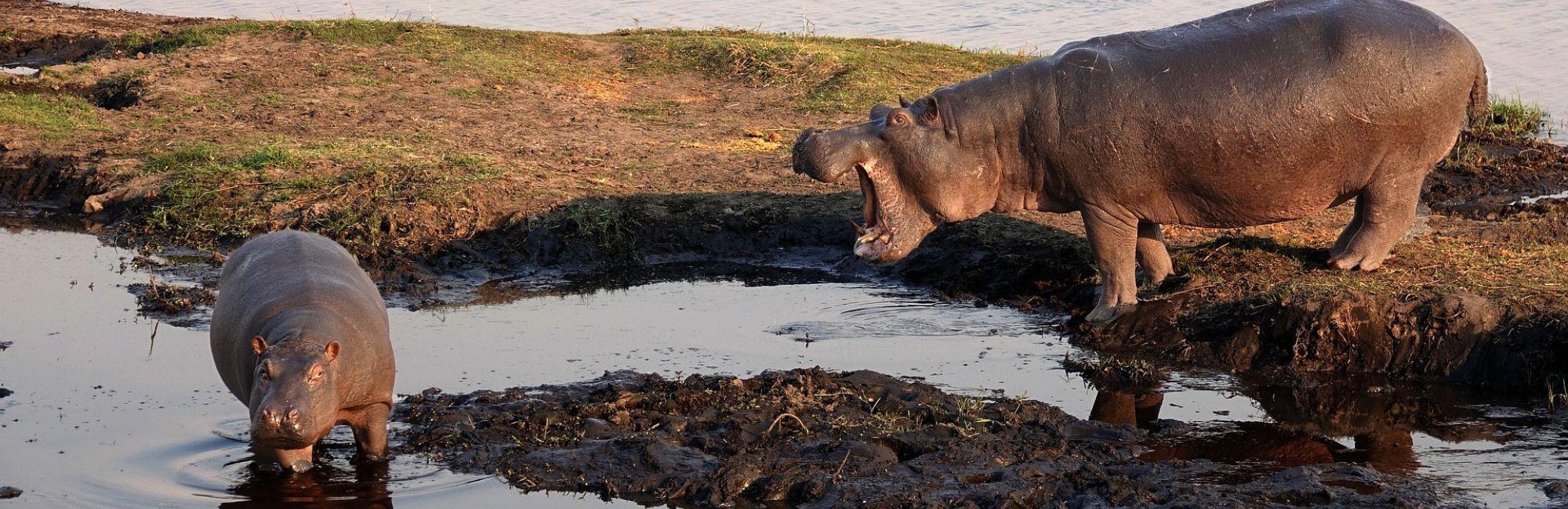 Reis Zambia Kafue Lower Zambezi South Luangwa