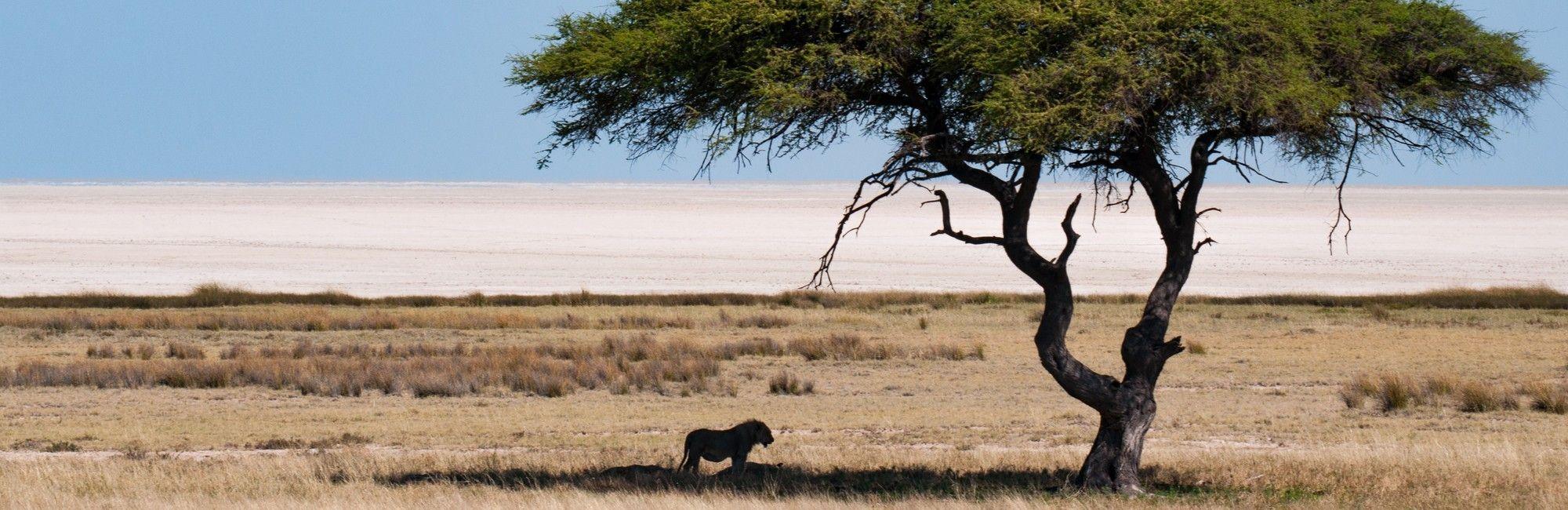 Kampeer groepsreis Namibië, Botswana en Victoria Falls