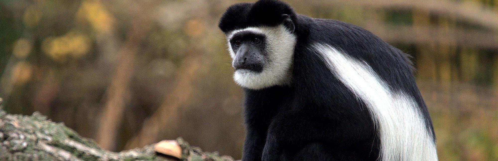 Rondreis Oeganda Safari Hoogtepunten