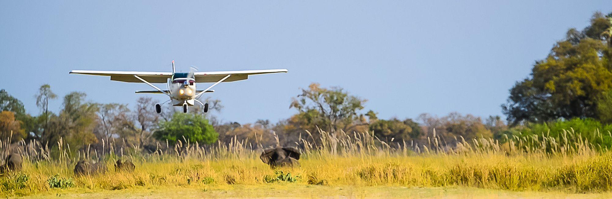 Botswana Fly in