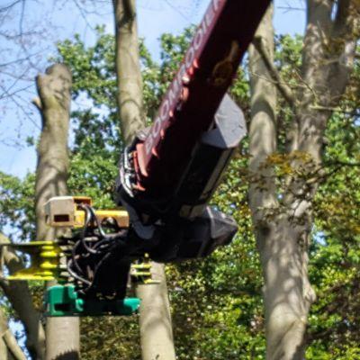 Zieke boom gerooid in Soest