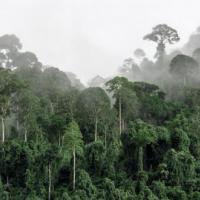 Inproba investeert in bosherstel Indonesië