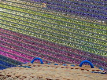 Voorjaar = Bollenvelden
