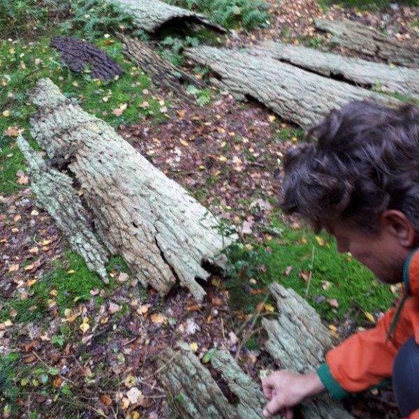 Ronald vindt de schors van een dode boom