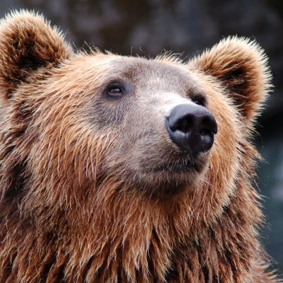 Weer wilde dieren kijken vanaf 25 mei in Amersfoort