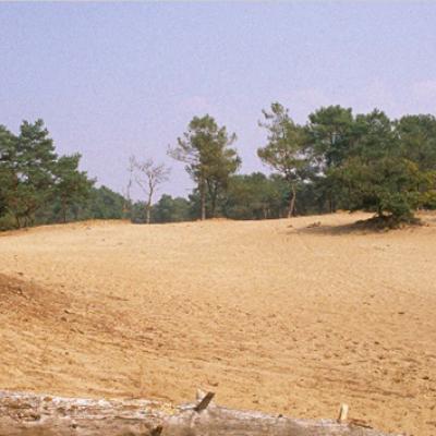 Soest stelt bospad Schapendrift open als extra parkeerterrein bij extreme coronadrukte in bossen en duinen, maar alleen als allerlaatste redmiddel
