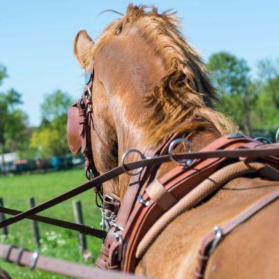 Getrappel van paardenhoeven in hedendaags jasje