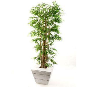 Bamboe plant in witte steigerhout plantenbak