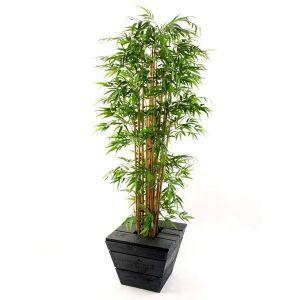 Bamboe plant in antraciet plantenbak