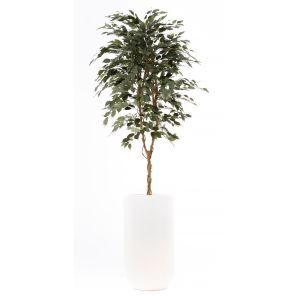 Ficus groen ca. 260 cm in ronde plantenbak met verlichting