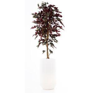 Ficus rood ca. 260 cm in ronde plantenbak met verlichting