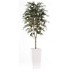 Ficus groen ca. 260 cm in hoogglans witte plantenbak