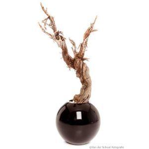 Bloempot hoogglans zwart (Ø)50x(h)44 cm. met Ghostwood 90cm.