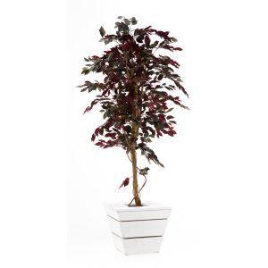 Ficus rood ca. 210 cm in witte plantenbak