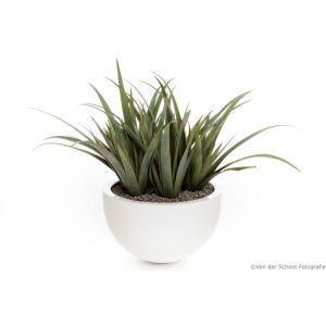 Bloempot hoogglans wit (Ø)60x(h)38 cm. met Agave Aloe