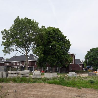 2017. Bomen Jan Lievenslaan worden toch gerooid