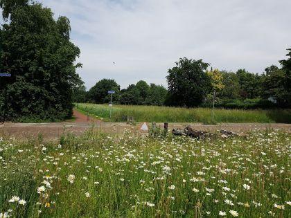 Burgerinitiatief: Bloemen op noordelijke Eng