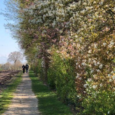 De kentenboompjes bloeien: even ruiken?